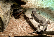 Nature Study Photo Prints - Lizard Print by Mark Moore