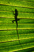 Saw Palmetto Photos - Lizard On The Other SIde by Marc Novell