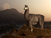 Llama Digital Art Metal Prints - Llama Dawn Metal Print by Daniel Eskridge