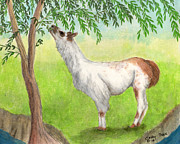 Eating Paintings - Llama Eating Tree Leaves Camelid Farm Animal Art by Cathy Peek