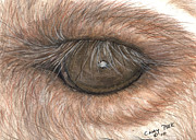 Close Up Painting Metal Prints - Llama Eye Animal Art Metal Print by Cathy Peek