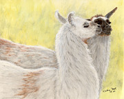 Llamas Prints - Llama Love Camelid Farm Animal Pets Art Print by Cathy Peek