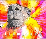 Llama Digital Art Metal Prints - Llamarama Metal Print by WDM Gallery