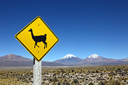 Andean Prints - Llamas Crossing Sign Print by James Brunker