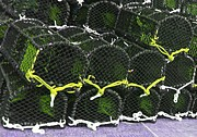 Baffling Prints - Lobster Pots Print by Gail Miller