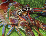 Bahamas Painting Metal Prints - Lobster Season Metal Print by Carey Chen