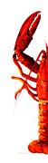 Restaurant Prints Posters - Lobster - The Left Side Poster by Sharon Cummings