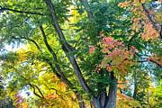 James BO  Insogna - Local Fall Foliage