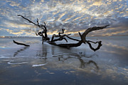 Tree Roots Photos - Loch Ness by Debra and Dave Vanderlaan