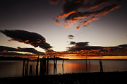 Locust Sunset Metal Prints - Locust Beach Sunset Metal Print by Paul Conrad