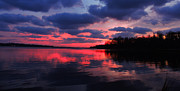 Locust Sunset Metal Prints - Locust Sunset Metal Print by Raymond Salani III