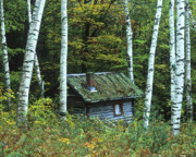 Green Forest Prints - Log Cabin in the Birch Forest Vermont Print by Joe  Palermo
