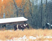 Log Cabins Photo Originals - Log Cabin Poney by Roland Stanke