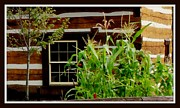 Log Cabin Art Photos - Log Cabin Window by Gail Matthews