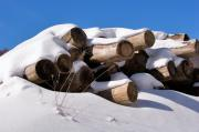 Winter Photos Prints - Log pile in a snow drift in winter Print by Louise Heusinkveld