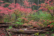 Fall Foliage Prints - Logs On the fire Print by Bill  Wakeley