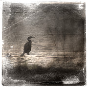 Grungy Digital Art - Lone Cormorant by Carol Leigh