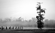 Lone Cypress Print by Chris Pietraroia