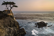 Sunset Seascape Framed Prints - Lone Cypress Framed Print by Francesco Emanuele Carucci
