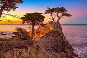 JIm Feeler - Lone Cypress