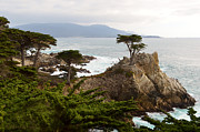 Lone Digital Art Framed Prints - Lone Cypress Large Framed Print by Barbara Snyder