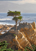 Misty. Posters - Lone Cypress - The icon of Pebble Beach California Poster by Christine Till
