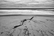 Jamie Pham - Lone driftwood in Zmudowski State Beach in Monterey County Black and White