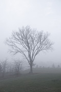 Elms Prints - Lone Elm in Fog Print by Kay Pickens