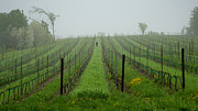 Mary Lee Dereske - Lone Figure in Vineyard in the Rain on the Mission Peninsula Michigan