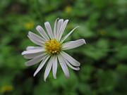 Kevin Caudill - Lone Flower