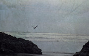 Lone Gull Framed Prints - Lone Gull Framed Print by Sharon Elliott