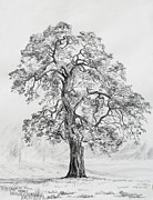 Oak Drawings Prints - Lone Oak Print by Philip Tolok