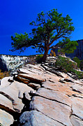 Photo-manipulation Photo Posters - Lone Pine at Zion Poster by ABeautifulSky  Photography