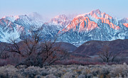 Lone Pine Prints - Lone Pine Morning Print by Don Hall