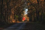 Darlene Bushue - Lone Red Maple