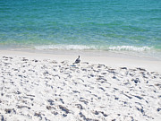 Navarre Beach Photographs Posters - Lone Seagull Watching Waves Poster by Emilee Pendl