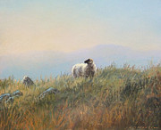 Sheep Pastels Framed Prints - Lone sheep II Framed Print by James R C Martin