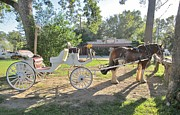 Ghost Walks Prints - Lone Star Carriage Company Of Jefferson Texas Print by Donna Wilson