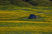 Marin Metal Prints - Lone stone Metal Print by Garry Gay