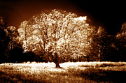 Ir Prints - Lone Tree Aglow Print by Paul W Faust -  Impressions of Light