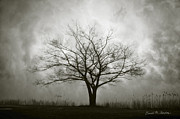 Drama Photographs Posters - Lone Tree and Clouds Poster by Dave Gordon