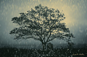 Bluish Prints - Lone Tree and Stormy Evening Print by Dave Gordon