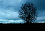 Aging Photos - Lone tree at Dusk by Fizzy Image