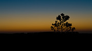 Tree At Sunset Posters - Lone Tree At Sunset Poster by Marco Oliveira
