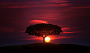 Lone Metal Prints - Lone tree Metal Print by Bess Hamiti