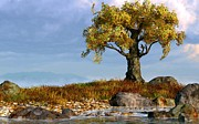 Plains Digital Art - Lone Tree by a Stream by Daniel Eskridge