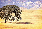 Central Coast Photos - Lone Tree by Caitlyn  Grasso