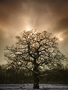 Winter Tree Prints - Lone Tree Print by Christopher and Amanda Elwell