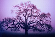 Lone Tree Dream - Purple Print by Diane Alexander
