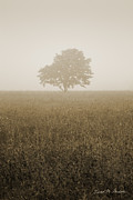 Lone Tree Framed Prints - Lone Tree in Meadow Framed Print by Dave Gordon